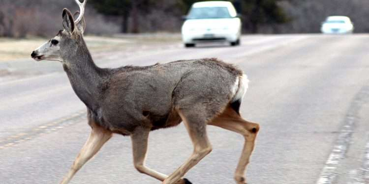 keep an eye out for deer crossing the road