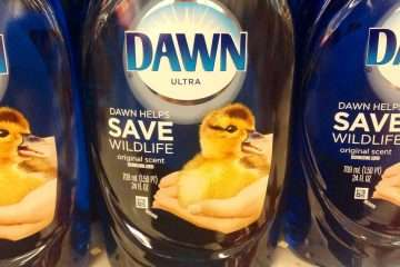 Can I use Dawn to Wash my Car?