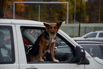 Can you legally travel with a dog in the front seat?